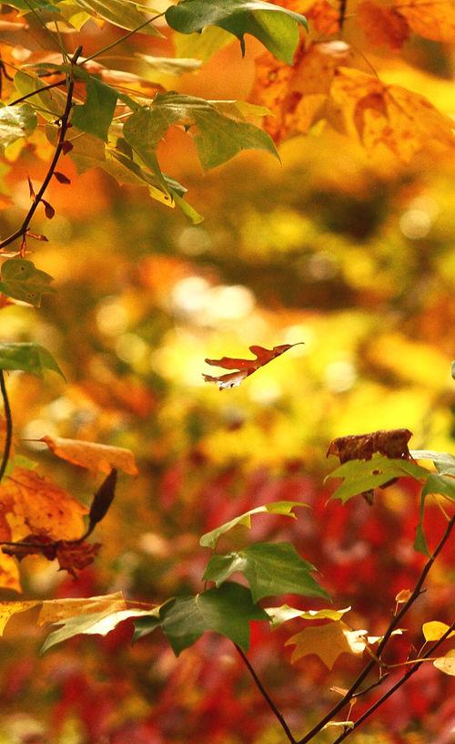 Leaf39